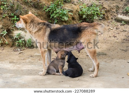 female dog with puppies  - stock photo