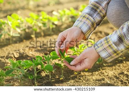 Female farmer's hands in soybean field - stock photo