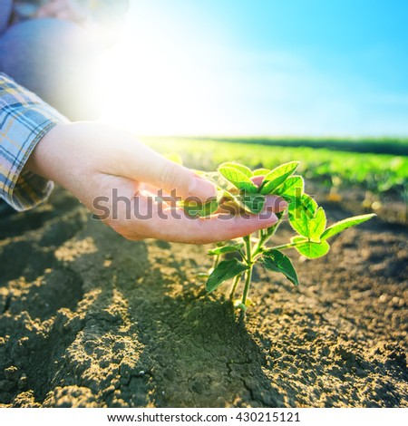 Female farmer's hands in soybean field, responsible farming and dedicated agricultural crop protection, selective focus. - stock photo