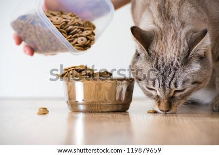 Female feeding her cat. Female hand adding food to cat's bowl - stock photo