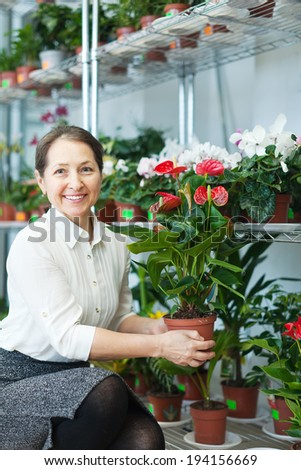 Female florist with anthurium plant at flower store  - stock photo