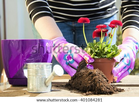Female gardeners hands planting flowers in pot with dirt or soil - stock photo