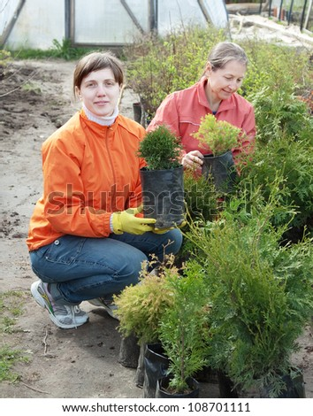 Female gardeners with thuya sprouts in pots - stock photo