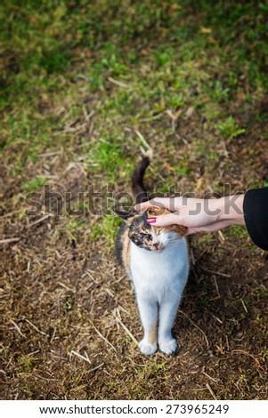 Female hand caresses a cat. - stock photo
