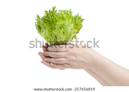 Female hand holding a salad Friese. In isolation.