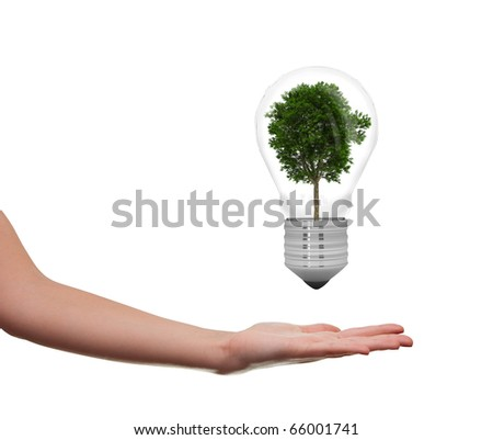 female hand holding a tree in a lightbulb