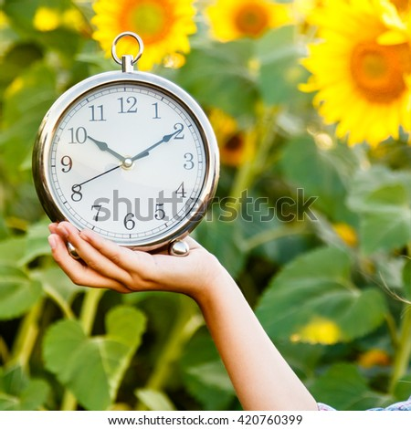 Female hand holding a watch on a sunflower field bacground. Time to harwesting concept. - stock photo