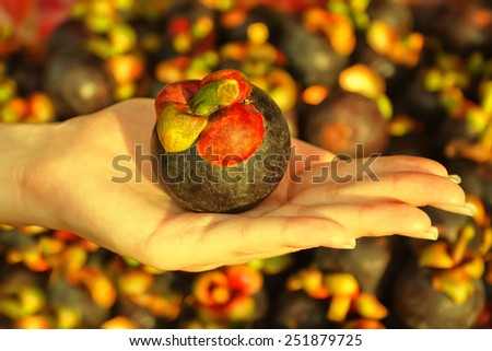 Female hand holding mangosteen fruit outdoors at market. Toned effect - stock photo
