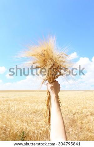 Female hand holding sheaf in field - stock photo