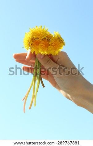 Female hand holding small dandelions on blue sky background - stock photo