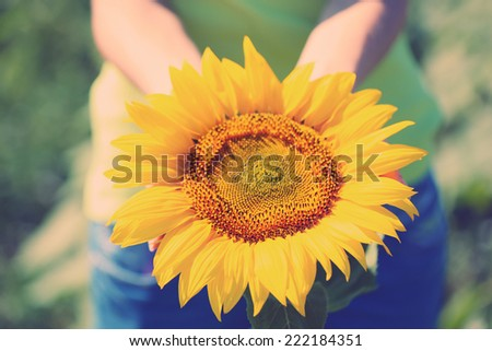 Female hand holding sun flower in field - stock photo