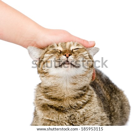 female hand patting a happy cat. isolated on white background - stock photo