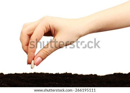 Female hand planting white bean seed in soil isolated on white - stock photo