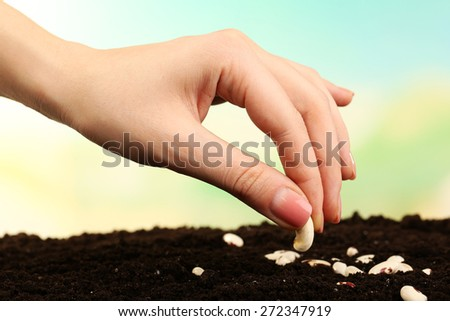 Female hand planting white bean seeds in soil on blurred background - stock photo