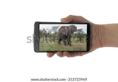 female hand with mobile phone isolated on white with elephant in kruger national park - stock photo