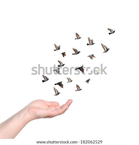 Female hand with open palm to set pigeons flying free. Isolated on white