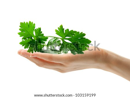Female hand with parsley