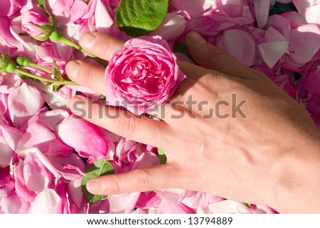 Female hand with rose