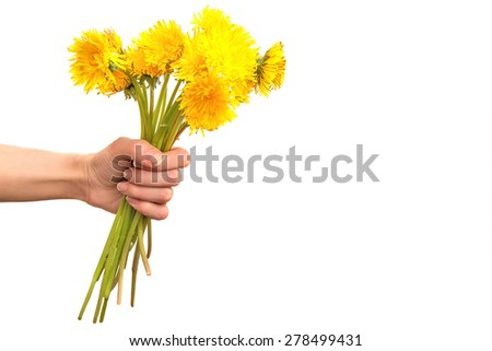 Female hand with yellow dandelions. Spring field flowers bouquet. Congratulation card with empty place for text.