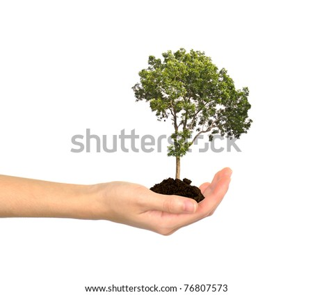 Female hands and tree on the white background - stock photo