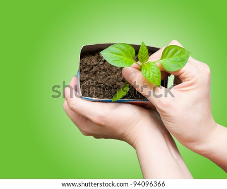 female hands hold a young seedling, over green background - stock photo