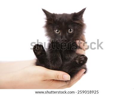 female hands holding a black kitten - stock photo