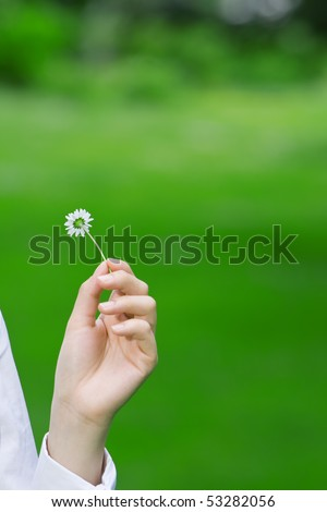 Female hands holding a fragile daisy against a green grass background, environmental theme - stock photo