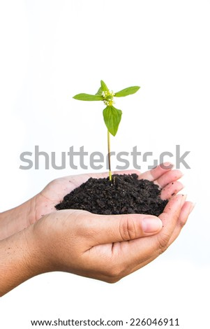 Female hands holding a plant with soil on white background isolated