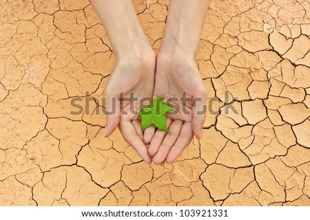 Female hands holding fresh green leaf over cracked ground background