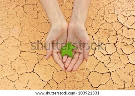 Female hands holding fresh green leaf over cracked ground background - stock photo