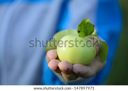 Female hands holding green apples.  - stock photo