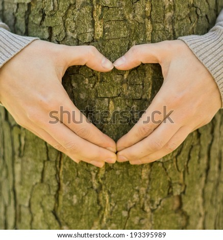 Female hands making an heart shape on a trunk of a tree  - stock photo