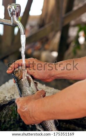 Female hands washing and cleaning mackerel tune fish  - stock photo