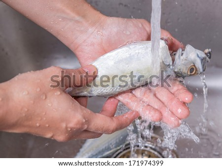 Female hands washing and cleaning short mackerel fish at the kitchen sink - stock photo