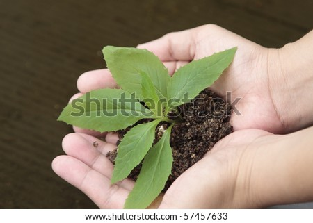 Female hands with a plant in a brown background. - stock photo