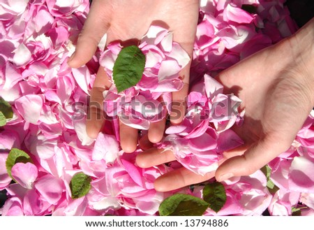 Female hands with petals of roses