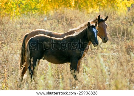 female horse with foal family