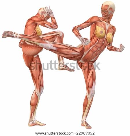 Female Human Body Anatomy Street Fight Stock Illustration 22989052 ...