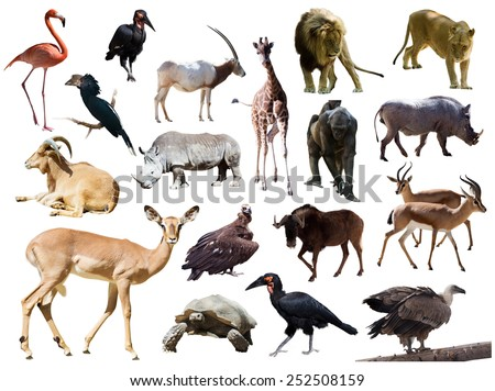 female impala and other African animals. Isolated over white  - stock photo