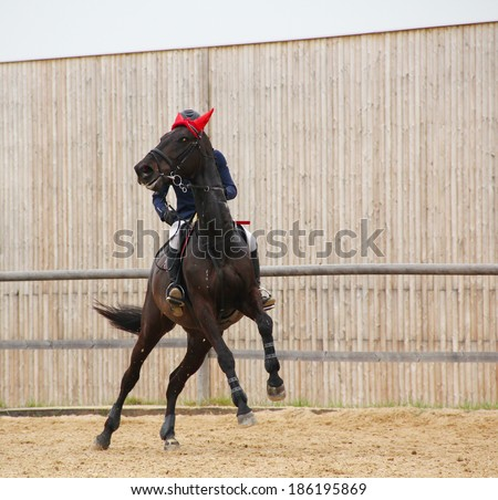Female jockey with purebred horse, jumping a hurdle - stock photo