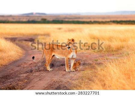 Female lion with cubs in Masai Mara, Kenya - stock photo