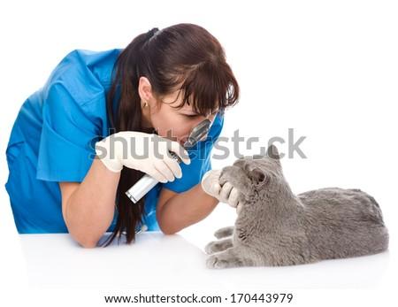 female professional vet doctor examining pet cat eyes. isolated on white background - stock photo