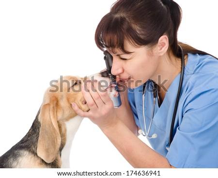 female professional vet doctor examining pet dog eyes. isolated on white background - stock photo