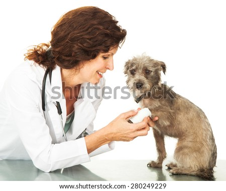 Female professional veterinarian doctor examining the paw of a mixed breed little dog