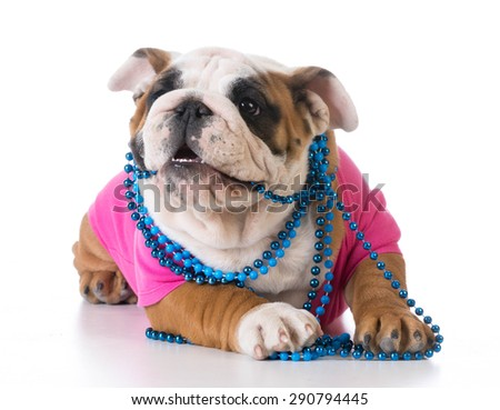 female puppy - bulldog wearing pink shirt and blue necklace on white background - stock photo