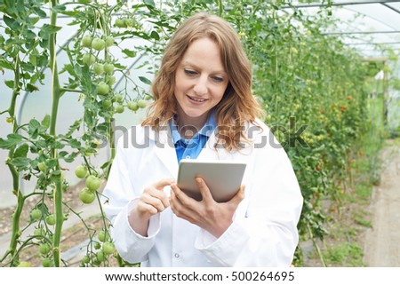 Female Scientist In Greenhouse Researching Tomato Crop