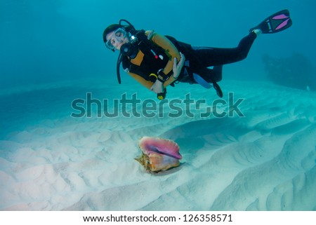 Female scuba diver and a beautiful conch shell on a sandy seabed in the Bahamas - stock photo