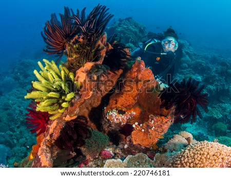 Female SCUBA diver behind a colorful coral outcrop - stock photo