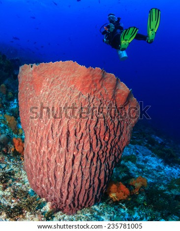 Female SCUBA diver near a large undersea barrel sponge on a tropical coral reef - stock photo
