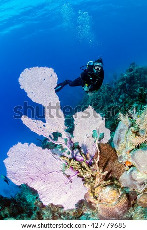 Female SCUBA diver next to a large sea fan on a tropical coral reef - stock photo